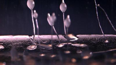 10 лучших производителей бактерий для септиков